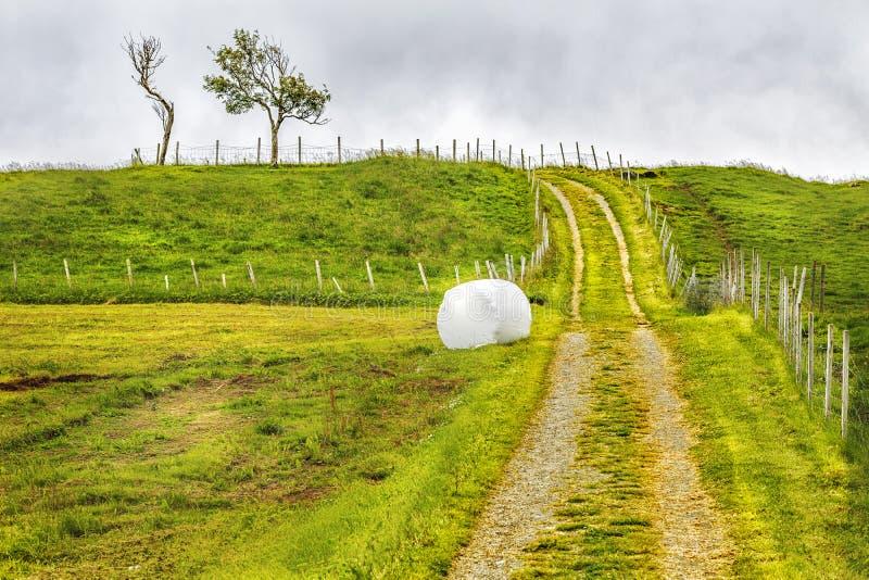 Hö rullade och emballerat på ett grönt mejat gräsfält royaltyfri foto