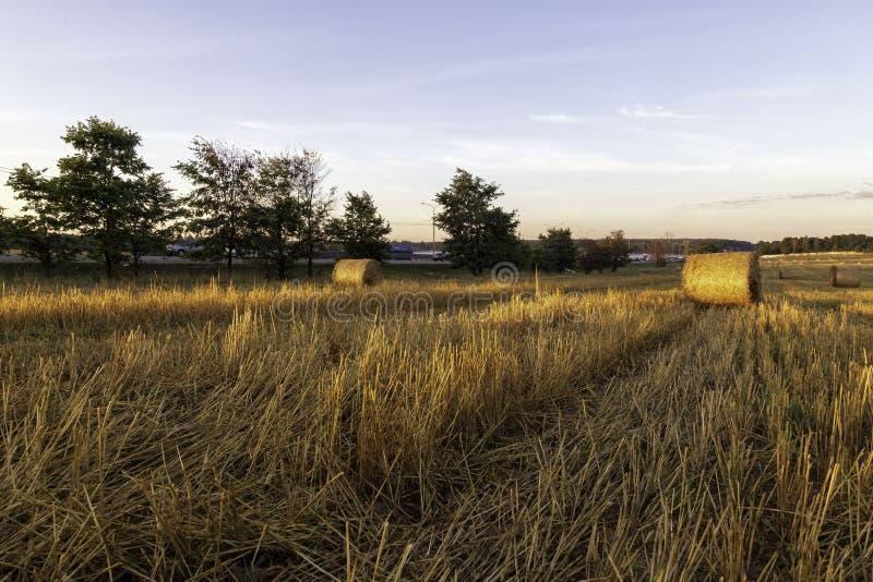 Hö-rullar på ängotta på soluppgång royaltyfri bild