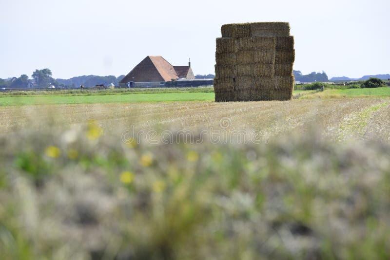 Höbal i det typiska landskapet Texel arkivbild