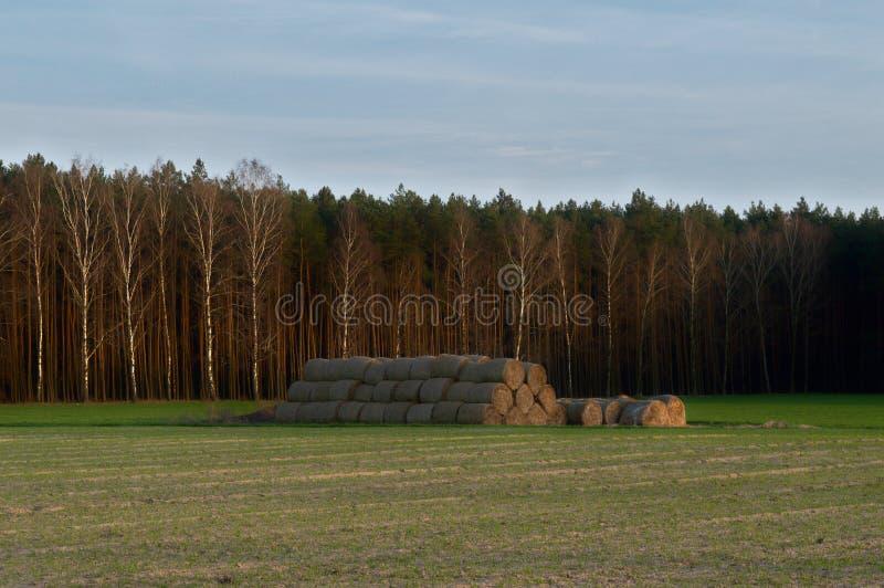 Höbaler på ett fält vid skogen arkivfoton