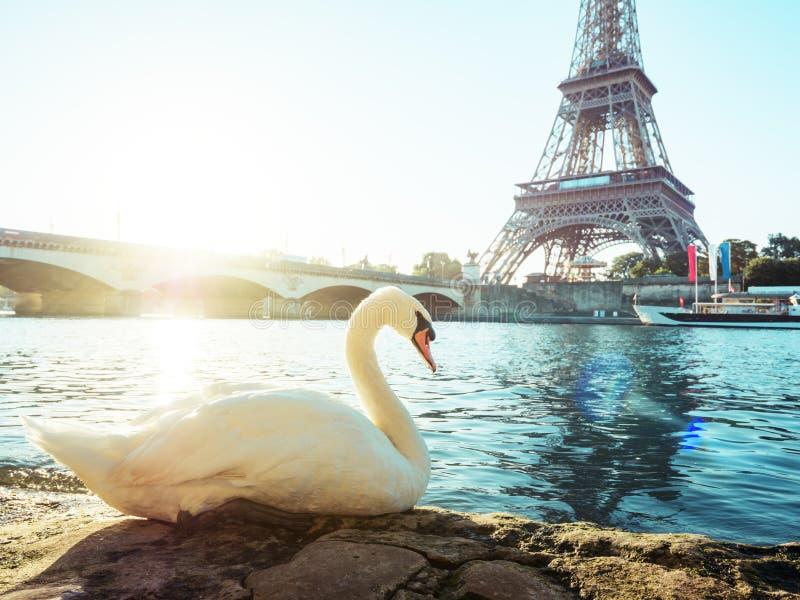 Höckerschwan und Eiffelturm, Paris stockfoto