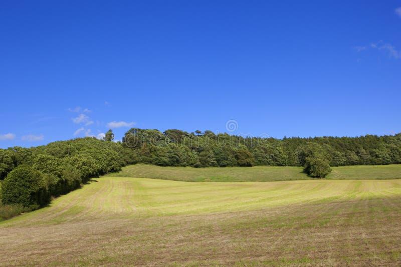 Höfält och skogsmarker arkivfoto