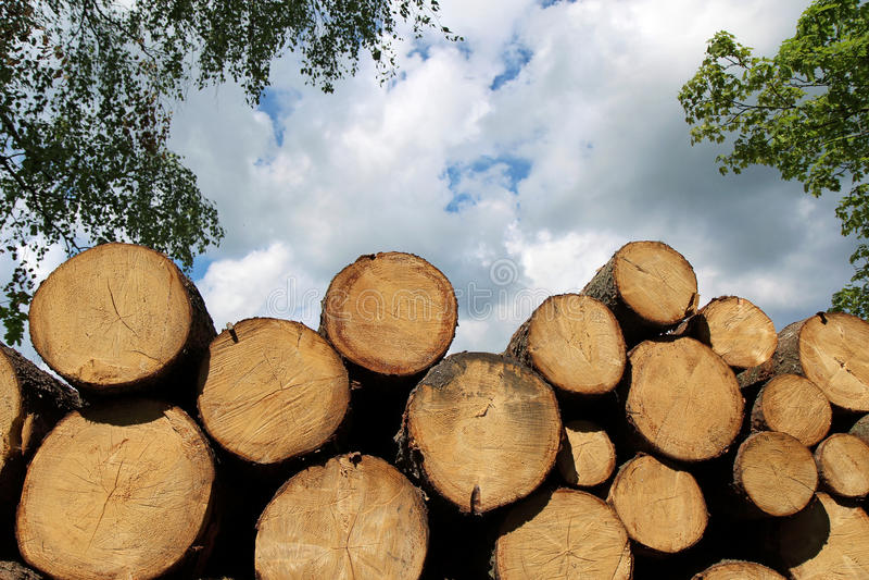 Hög av den wood stammen för nytt snitt i skog arkivbild