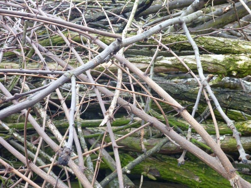 Hög av det torra trädfilialsnittet i trät arkivfoton