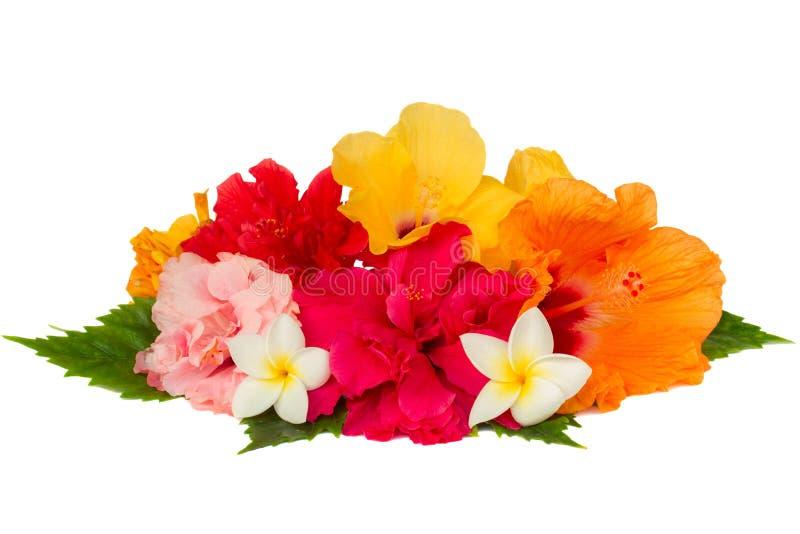 Hög av färgrika hibiskusblommor arkivbild