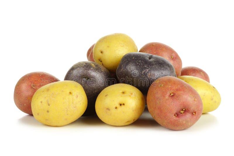 Hög av färgrika små potatisar över vit fotografering för bildbyråer