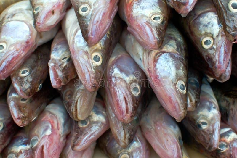 Hög av fisken royaltyfria bilder