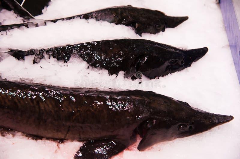 Hög av fisken på is arkivfoton
