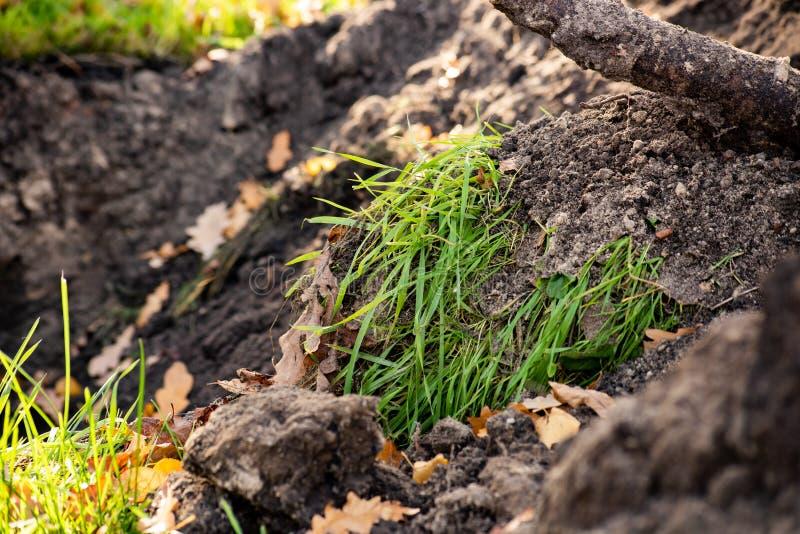 Hög av grävd jordning med grönt gräs royaltyfria foton