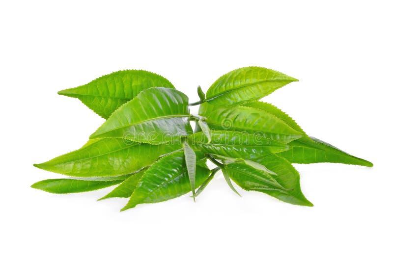 Hög av gröna teblad ilsolated på vit royaltyfria bilder