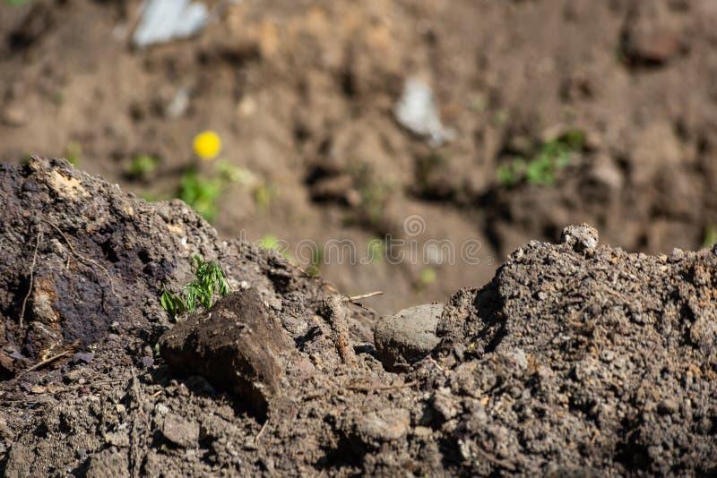 Hög av jordning med ruttet trä royaltyfri foto
