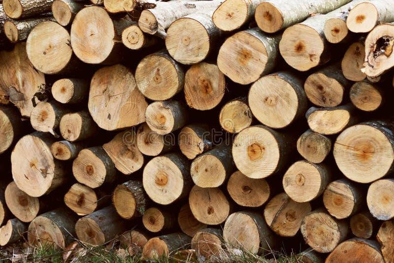 Hög av klippt bakgrund för textur för trädjournaler wood Trädstammar Vedträbunt för bakgrunden arkivfoto