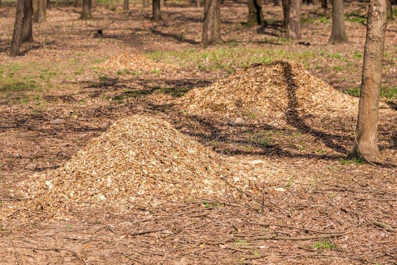 Hög av krossade trädfilialer royaltyfria foton