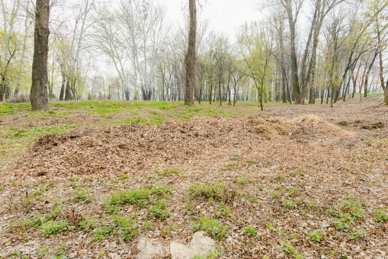 Hög av krossade trädfilialer och sidor royaltyfri foto