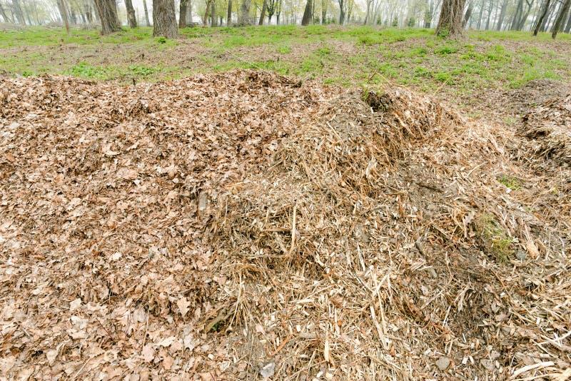 Hög av krossade trädfilialer och sidor arkivbild
