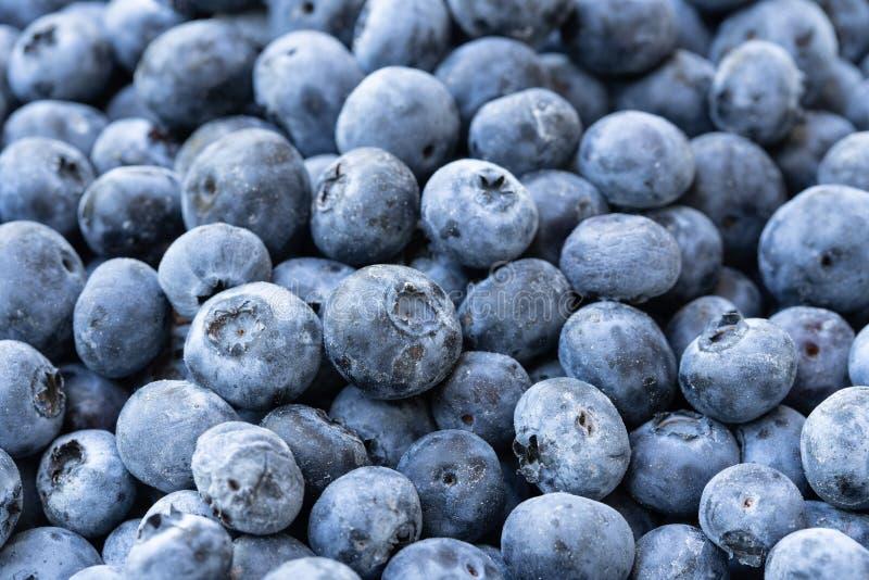 Hög av mörker - blåa blåbär fotografering för bildbyråer
