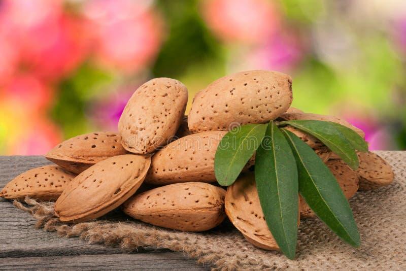 Hög av mandlar i deras hudar med bladet på en suddig trädgårds- bakgrund för trätabell arkivfoto
