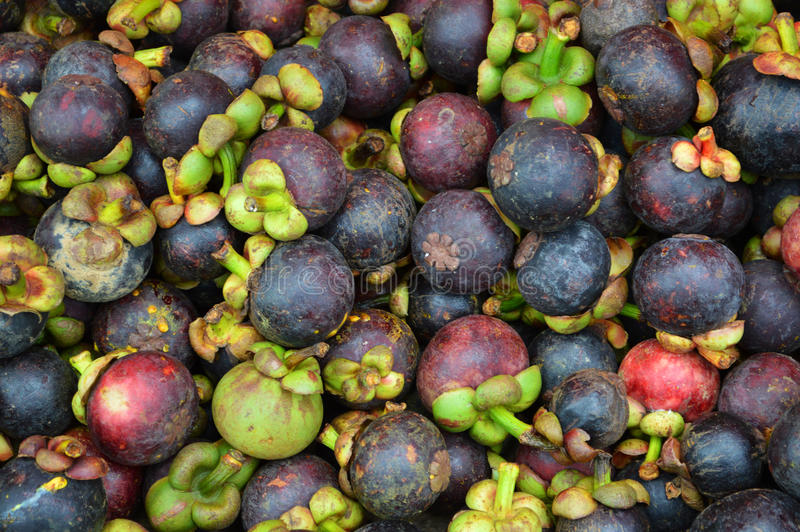Hög av mangosteenen arkivbilder