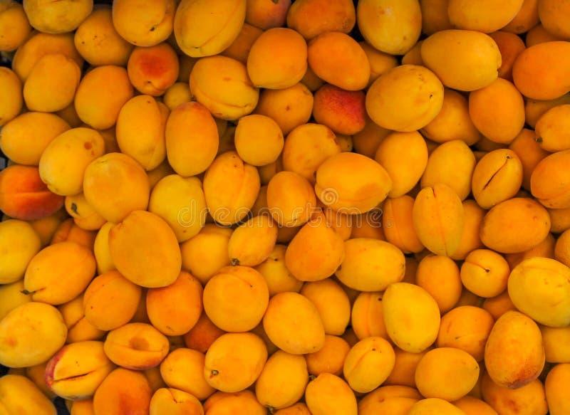 Hög av mogna aprikors arkivbild