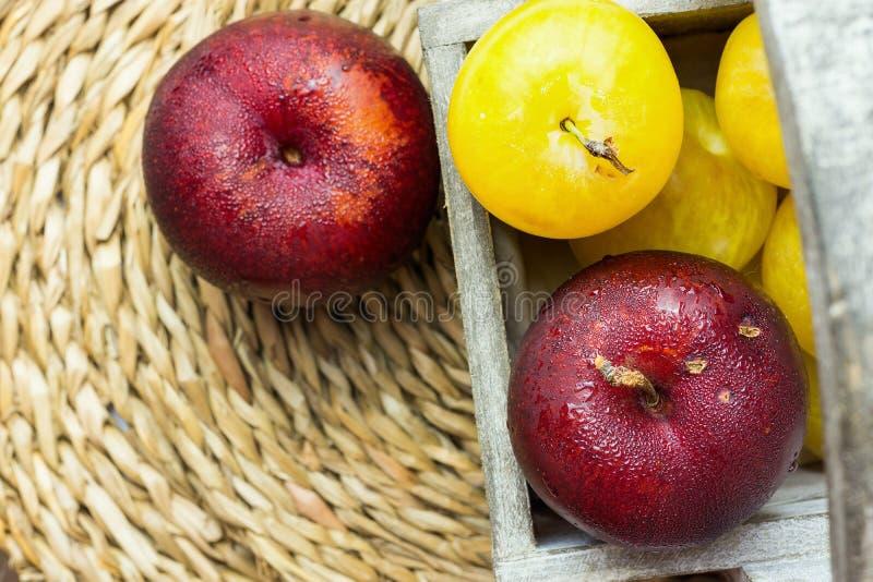 Hög av mogna saftiga organiska gula röda plommoner i träträdgårds- ask på rottingkustfartyget Autumn Fall Produce colors livligt  fotografering för bildbyråer