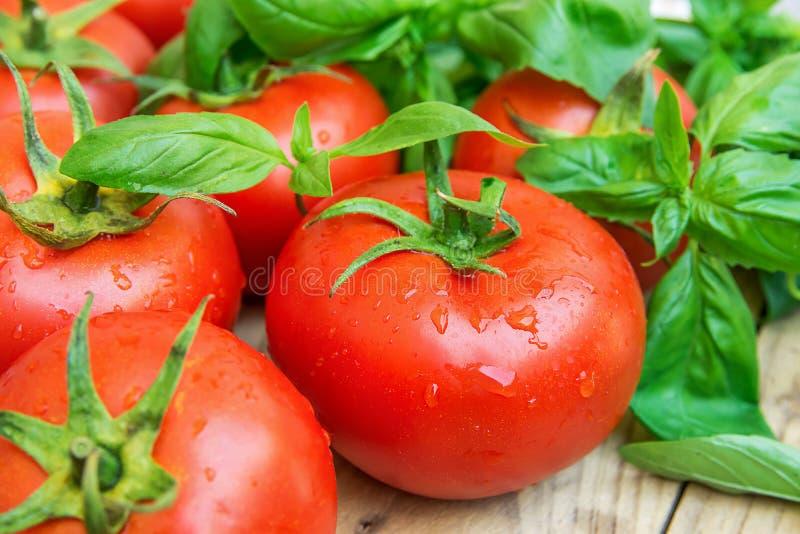 Hög av nya mogna organiska våta tomater spridda på Wood gräsplan Basil Healthy Diet Mediterranean Style för tabell för kökträdgår royaltyfri foto