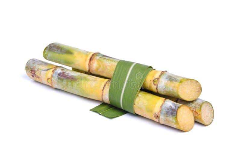 Hög av nya sockerrörstammar royaltyfri bild