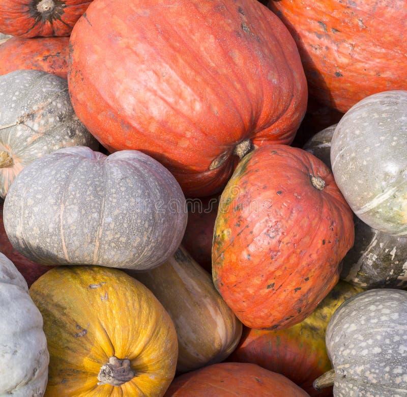 Hög av olika pumpor på tacksägelsefesten bakgrund grönsaker arkivfoto