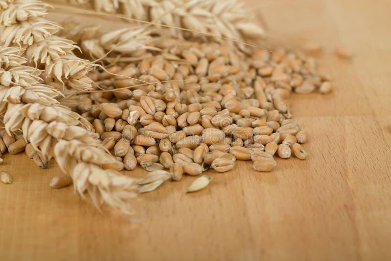 Hög av organiska hela kornvetekärnor och öron royaltyfria foton