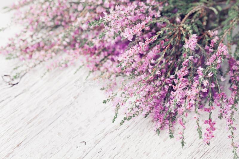 Hög av rosa den vulgaris ljungblommacallunaen, erica, långa på den vita lantliga tabellen Hälsningkort för moder- eller kvinnadag fotografering för bildbyråer