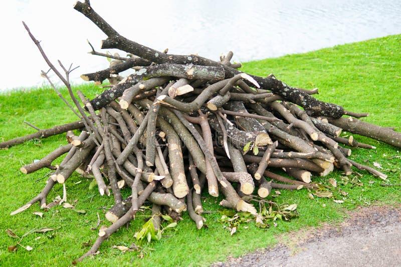 Hög av sågade trä- och snittträdfilialer Stammar för tvärsnittbjörkträd Timmerbakgrund Journalhögen på ett läger i parkerar royaltyfri foto