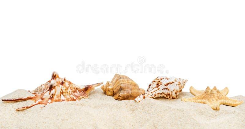 Hög av sand med snäckskal arkivbild