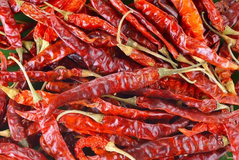 Hög av torkad bakgrund för peppar för röd chili royaltyfri fotografi