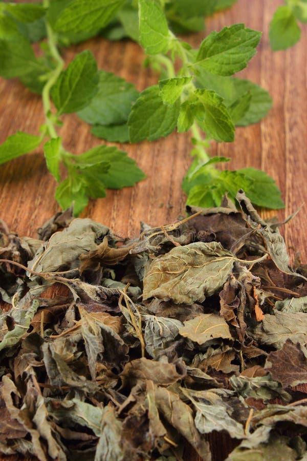 Hög av torkad och ny citronbalsam på trätabellen, herbalism royaltyfri foto