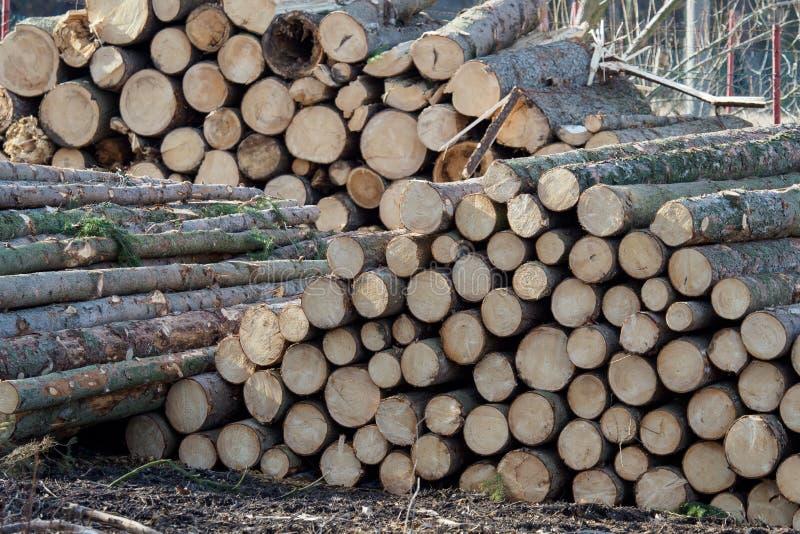 Hög av trä Enorma buntar av journaler travde högt på en lumb royaltyfri fotografi