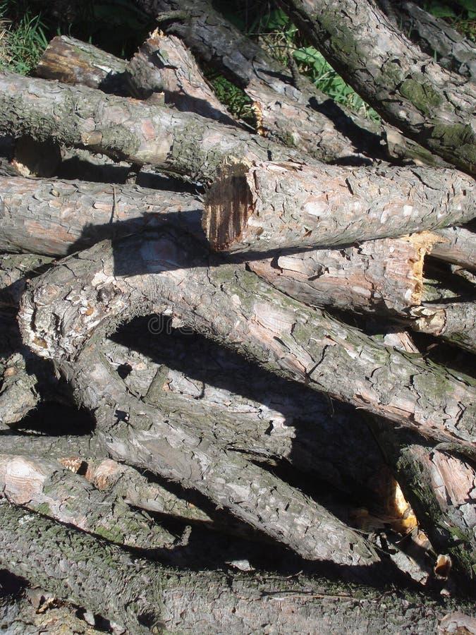 Hög av trädsnittfilialer royaltyfri foto