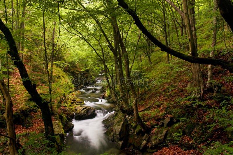 hög bergflod för skog royaltyfria bilder