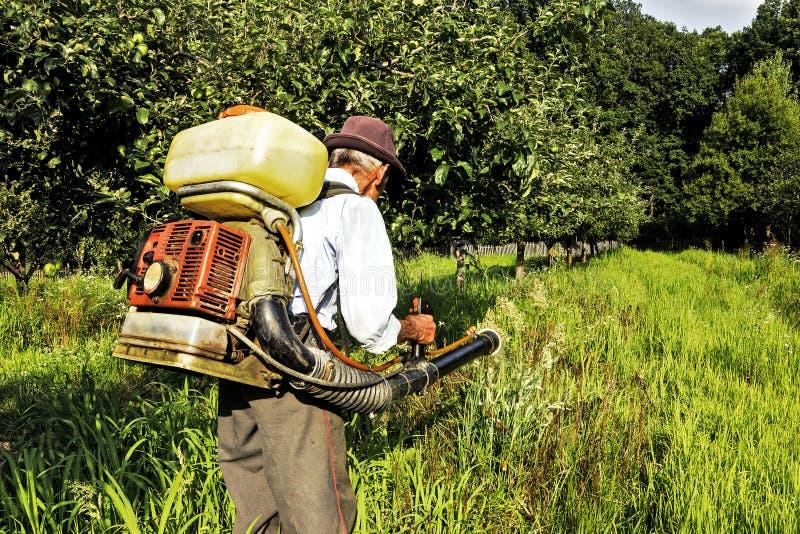 Hög bonde som besprutar fruktträdgården royaltyfri bild