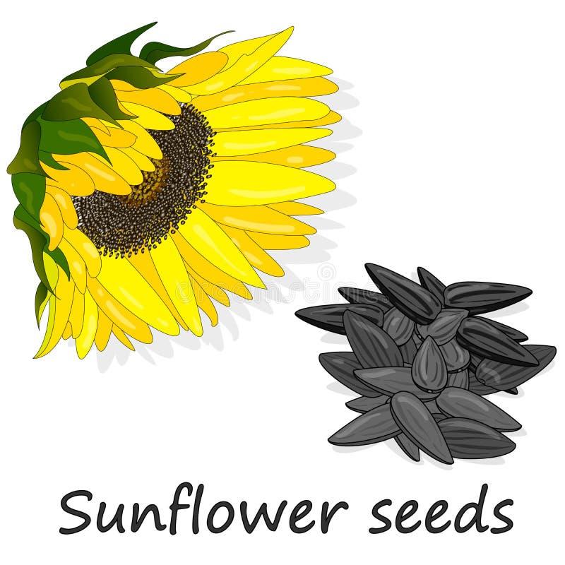 Hög för solrosfrö mot den vita bakgrundsillustationen royaltyfri illustrationer