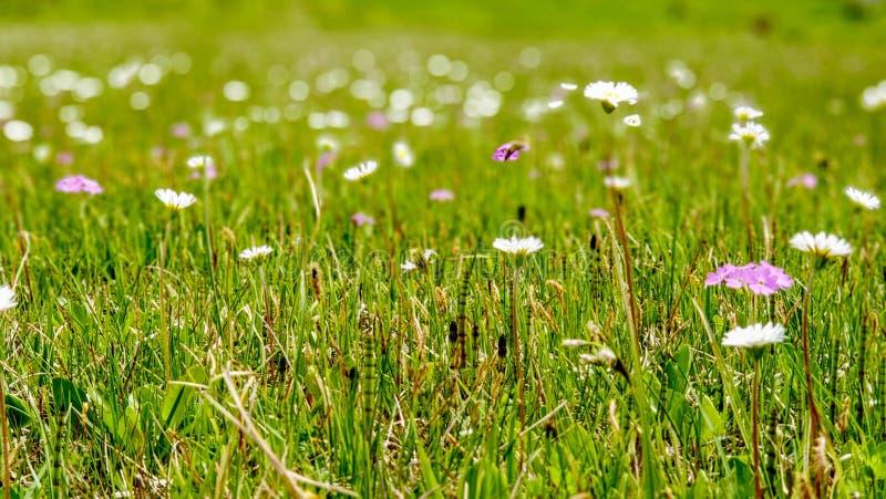 Hög hedäng med vårblommor i ny mjuk gräsplan royaltyfria bilder