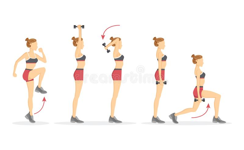 Hög illustration för knä- och tricepskotlettvektor royaltyfri illustrationer