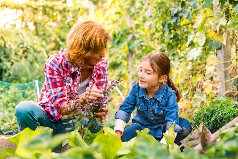 Hög kvinna med grandaughter som arbeta i trädgården i trädgårdträdgården arkivbild