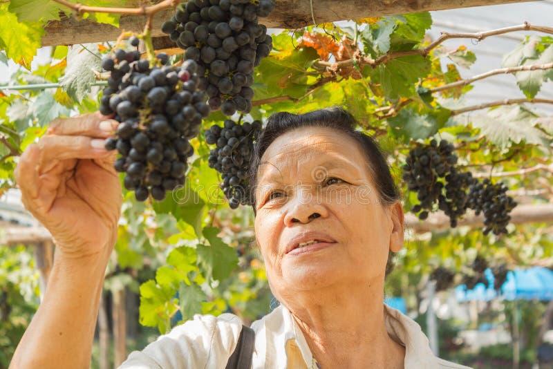 Hög kvinna med utomhus- druvor royaltyfria foton
