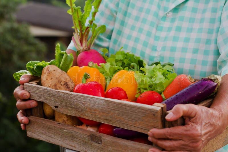 Hög kvinna och grönsak för sunt ätabegrepp arkivfoton