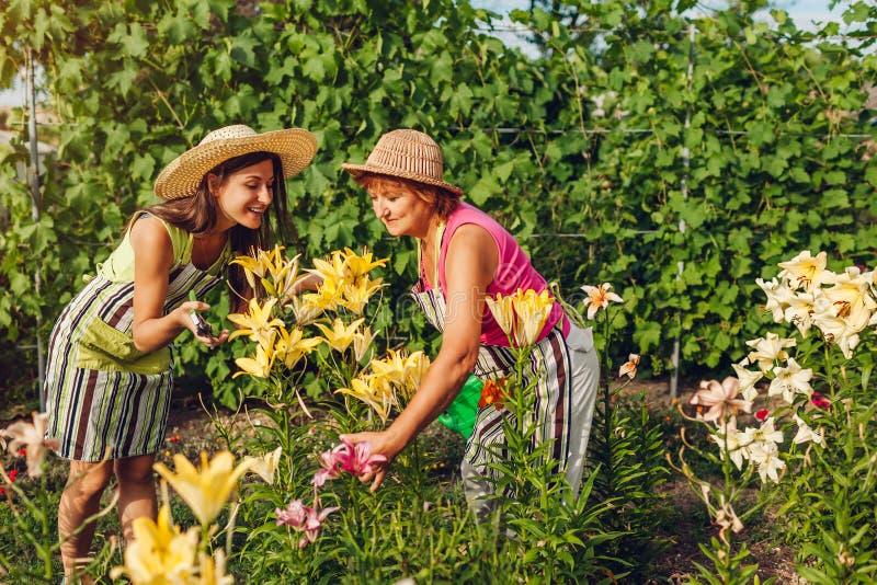 Hög kvinna och hennes dotter som samlar blommor i trädgård Trädgårdsmästare som klipper av liljor med pruner arbeta i tr?dg?rden  royaltyfri foto