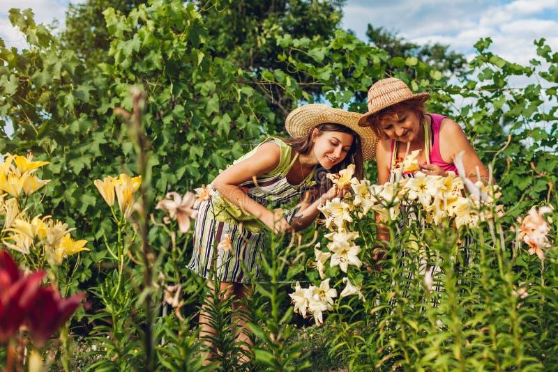 Hög kvinna och hennes dotter som samlar blommor i trädgård Trädgårdsmästare som klipper av liljor med pruner arbeta i tr?dg?rden  arkivbild