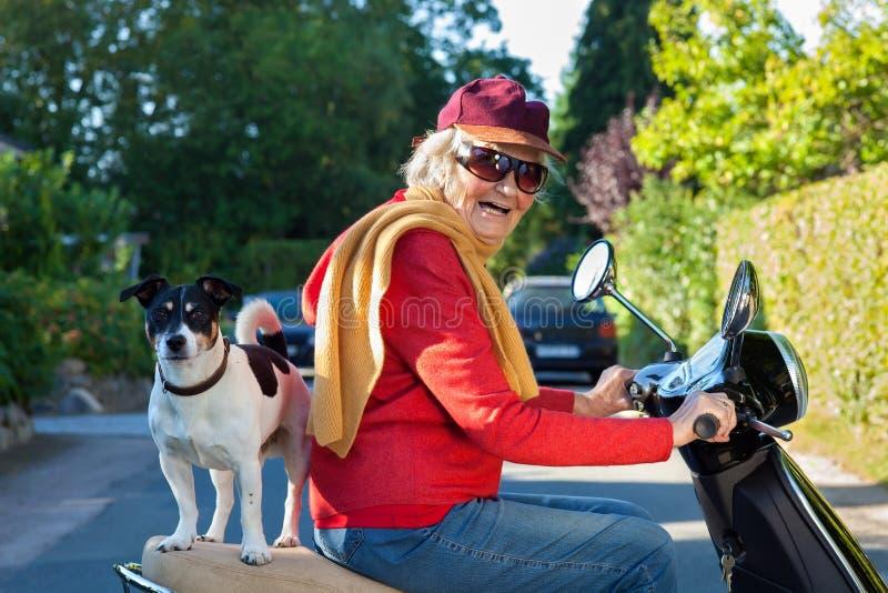 Hög kvinna och hennes hund på en sparkcykel royaltyfria bilder