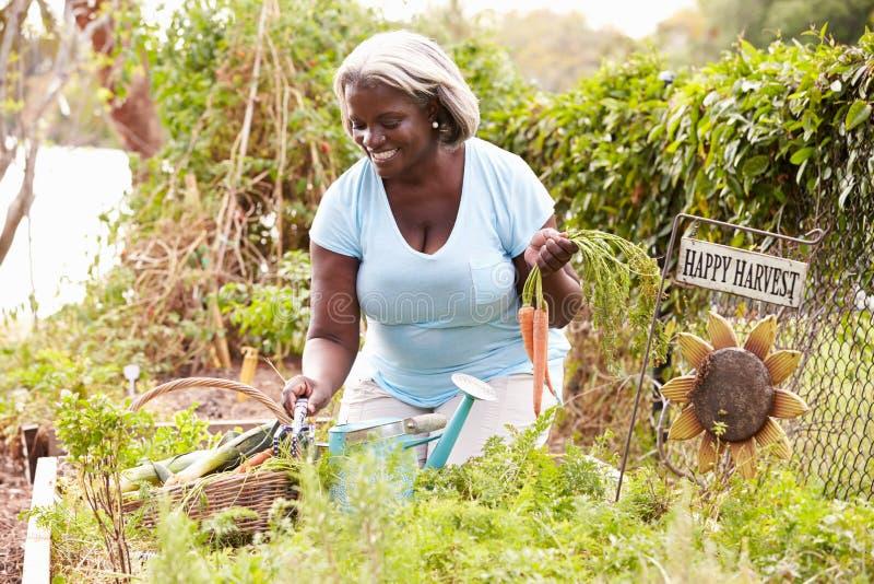 Hög kvinna som arbetar på odlingslott arkivbild