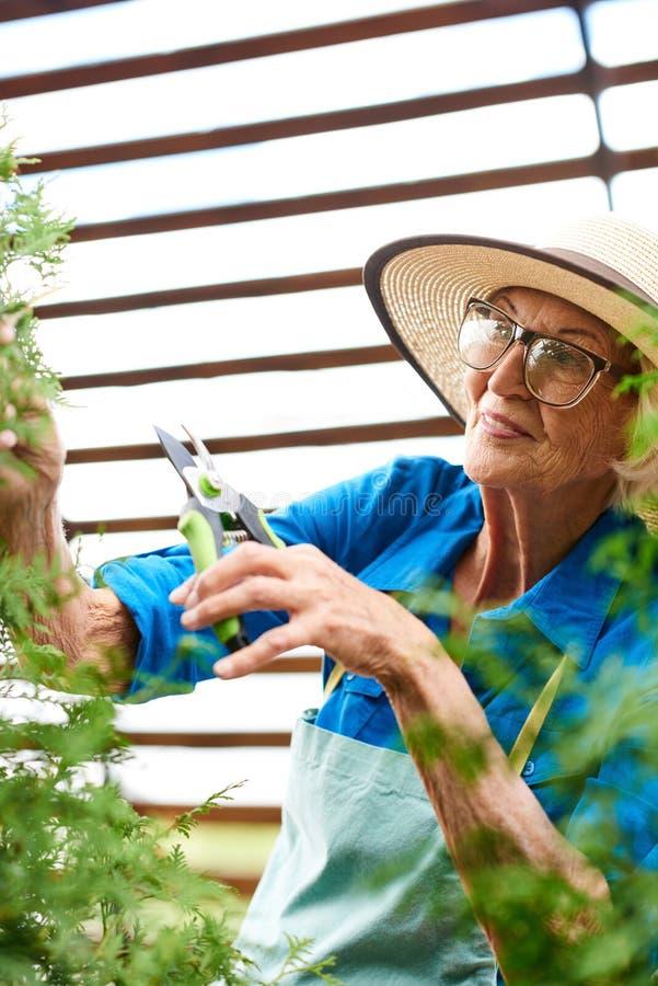 Hög kvinna som att bry sig för växter royaltyfri fotografi