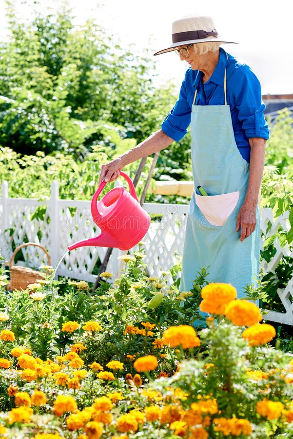 Hög kvinna som bevattnar blommor fotografering för bildbyråer