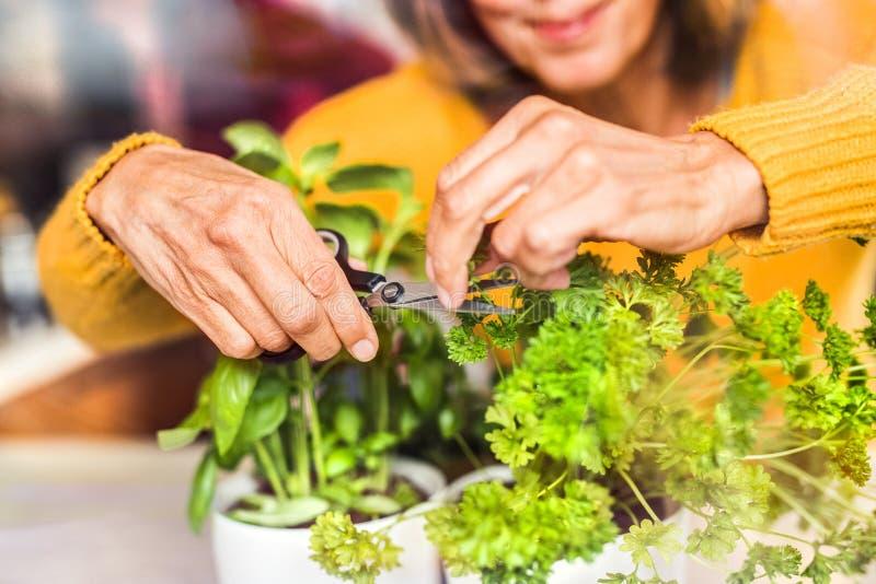 Hög kvinna som förbereder mat i köket royaltyfri bild